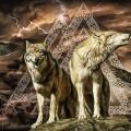 Сила и значение руны волка