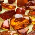 История и свойства камня янтарь