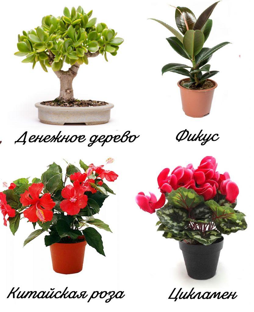 Растения для удачи