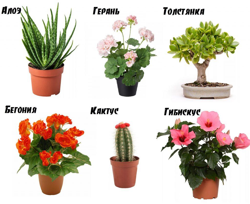Цветы обереги